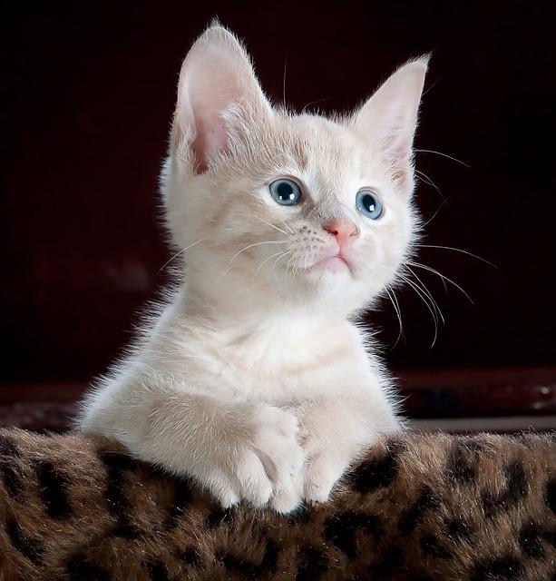kitty un chaton, ça fait toujours cliquer...